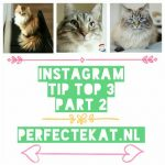 Cat Instagram part 2