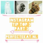Cat Instagram part 3