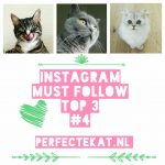 Cat instagram part 4