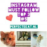 Cat Instagram part 5