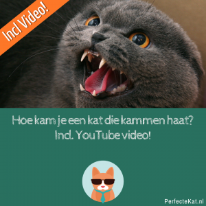 Hoe kam je een kat die kammen haat? Incl. YouTube video!